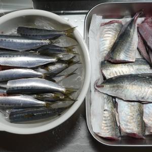 唐戸市場で魚を買った