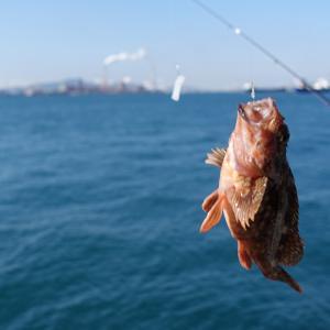 カサゴ釣りに行ったのではありませんが