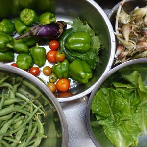 野菜収穫 茗荷ほか