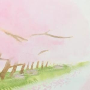 桜のハガキ