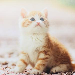 ふみの日切手と子猫のカード
