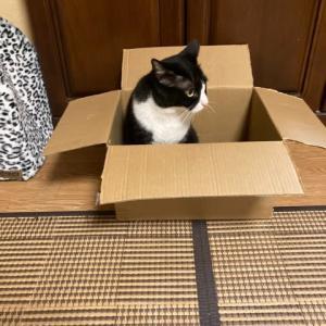 箱ネコたま