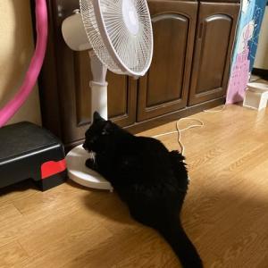 扇風機ねこ