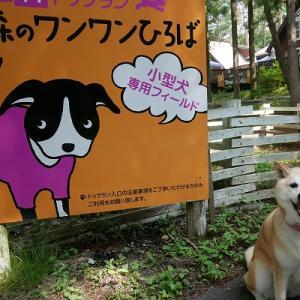 2019・夏・涼を求めて清里高原へ(1日目)