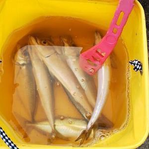 初釣り_祭り_噂の乙浜漁港の朝マズメ と ・・・・・