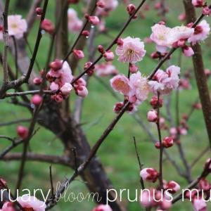 梅で華やぐ如月