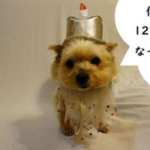 祝 ノン12歳! ハル10歳!!
