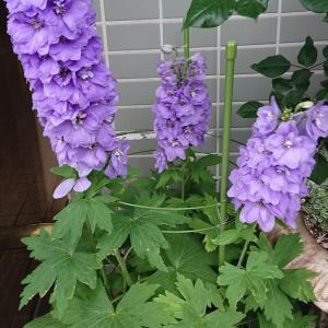 花の名前がわかりません。。