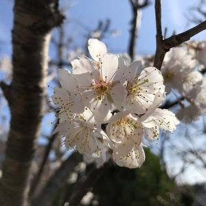 春ですね庭のお花が綺麗です。