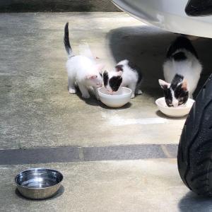 白黒パンダ猫の親子来た〜!