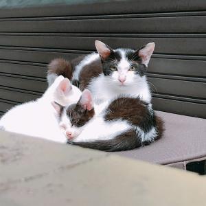 野良猫パンダちゃん親子の今日。