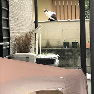 野良猫親子の近況。