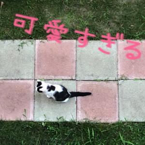 パンダ猫ちゃん親子との距離