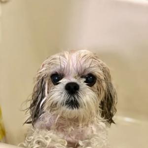 シャワーのあとは、大変な わけで・・