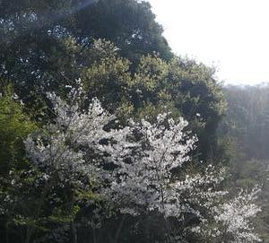 芝桜大地の恵みをそのままに