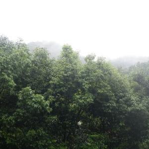 梅雨さなか今日の遊びが見つからぬ