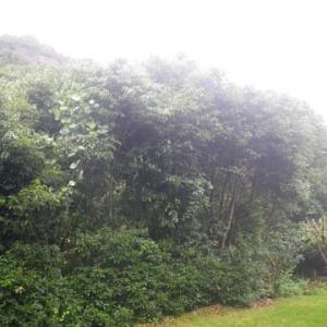 今日も雨セミさえ啼かず羽ばたかず