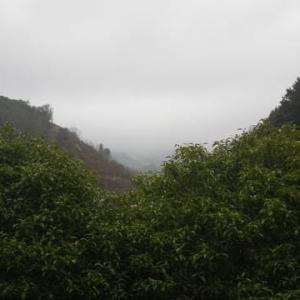 涅槃橋渡る戸惑い春の雨