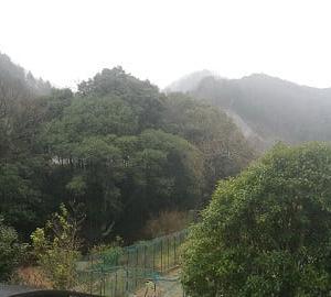 雨上がり山茶花の咲く温かさ