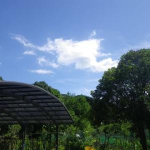 蓮咲いて蜘蛛の糸張る午後の庭