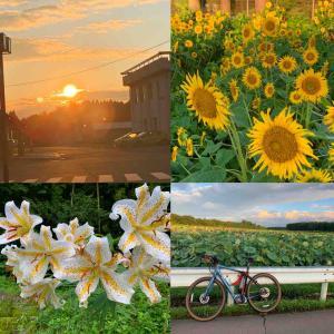 #太陽 #向日葵サイクリング #サイクリングロード
