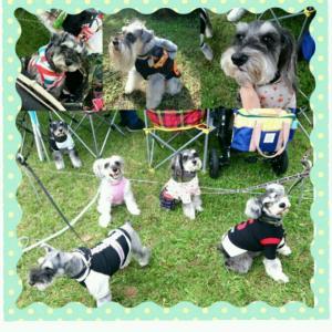 10月のクララ。髭犬祭へ行く!