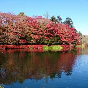 11月のクララ。紅葉の軽井沢に行く!