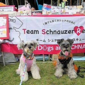 10月のクララ。髭犬祭2016に行く! 後編