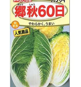 トーホク交配 白菜の種 郷愁60日