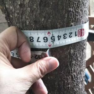 義実家の片づけ 1 高木の伐採 前