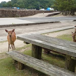 鹿のある風景 フェリーの払い戻し手数料が高い!