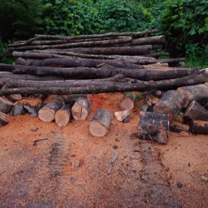 今回は原木にナラ以外の樹種が混ざっています。