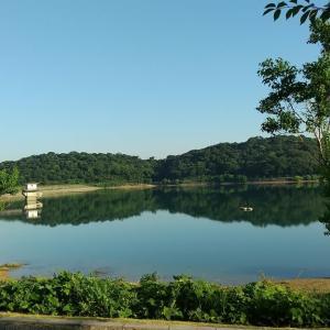 初立池公園で朝んぽしたよ🐶