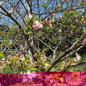 秋のサンテパルクでお花見できる!?