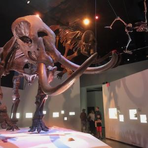 ヒューストン自然科学博物館は、恐竜から哺乳類まで盛りだくさん。