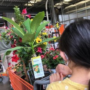 裏庭の花壇に植える花を買いに行きました@Home Depot
