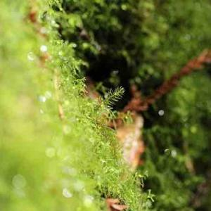 2013年6月屋久島旅2日目。フォトトレッキングで学んだ自然と心の向き合い方。