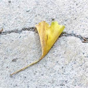 落ち葉を観て思い出したリトルミイの言葉