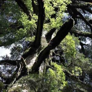 あの日の屋久杉。また屋久島に呼ばれる日を願う。