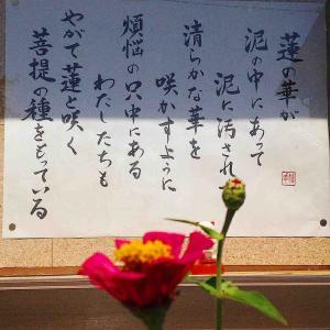秋の彼岸。お寺の掲示板にあった蓮の花についてのことばを
