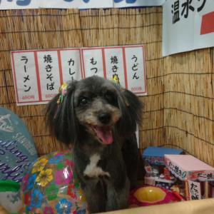 トリミング・ミックス犬・ルナちゃん♪