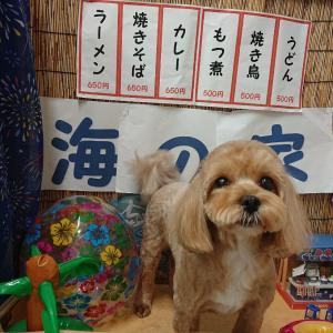 トリミング・ミックス犬・きなこちゃん♪