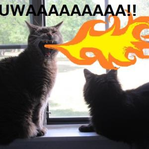 窓際の巨神猫