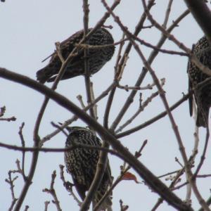 鳥のなる木と空