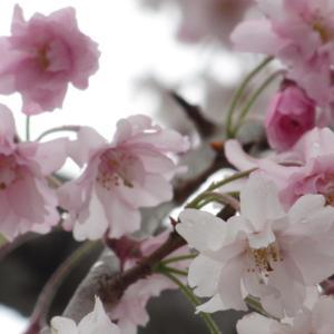 花と鳥の週末・2