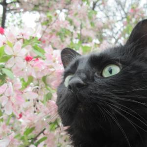 花と猫と鳥