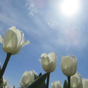 花と強風の週末