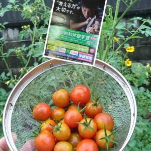 今朝の収穫&学研教室❗
