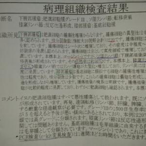 華琉の闘病記録 9 〜病理の結果〜