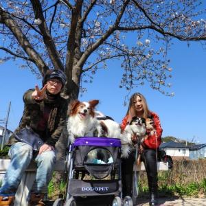 華琉の犬生活
